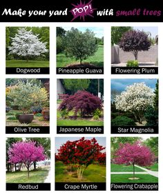 , Want a pretty tree in your yard but do not have a ton of space? Here are some of our favorite small trees that can make your yard POP & , Want a pretty tree in your yard but do not have a ton of space? Front House Landscaping, Garden Front Of House, Trees For Front Yard, Outdoor Landscaping, Outdoor Gardens, House Landscape, Landscape Design, Garden Design, Garden Yard Ideas