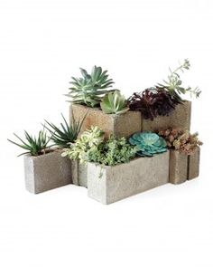 MODULAR SUCCULENT PLANTERS---To make it, line the inside of cinder blocks with metal mesh, using gardening gloves to protect your skin against the mesh's sharp edges. Pour cactus soil onto the mesh, and place succulents inside the blocks. Set the blocks outside; water only during severe drought conditions.