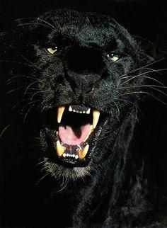 Images Puma Pumas Panther 208 Panthers Best Black qUH887