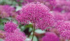 Groupon - Pack de 12 plantes attirant les abeilles et les papillons. Prix Groupon : 29,90€