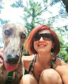 Katie the Greyhound - petsit for 4 days in July 2016 #greyhound #greyhounds #dog #rescue #sighthound #hound #dogrescue #petsitting #pet #animal #greyhoundrescue