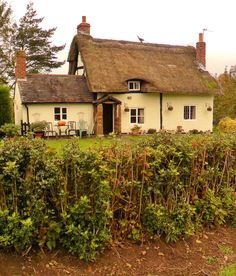 Thatched Cottage with Holly hedge, Long Birch, Staffordshire, England