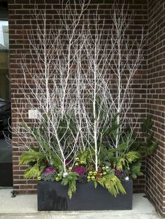 Sticks and twigs can be a thrifty source of drama for a container garden. Never tried container gardening in winter before? Well, you're missing out on a lot! Read our article to find the best winter container garden ideas. Christmas Urns, Christmas Garden, Outdoor Christmas Decorations, Winter Garden, Christmas Holidays, Christmas Wreaths, Winter Holiday, Christmas Branches, Christmas Things