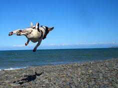 beach hover dog