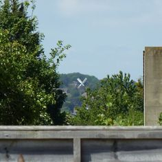10 June 2015: Salvington windmill. Not the most exciting of photos, but I like the fact that I can see the sails from my garden