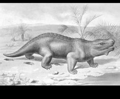 Pareiasaurus  by Joseph Smit (1836-1929)  from Nebula to Man  1905 England