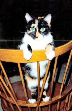 Pretty girl - JhC #Cat #Pet