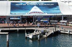 aquarium de sydney - Recherche Google