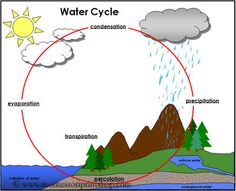 Water Cycle Chart (C2, W4)