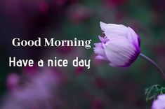 Beautiful Good Morning Images, Pictures And Quotes Sweet Good Morning Images, Morning Images In Hindi, Good Morning Picture, Morning Pictures, Friends Image, Happy Birthday Images, Reality Quotes, Cool Baby Stuff, Picture Quotes