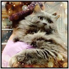 Cat hug!! #cameran #cameranapp