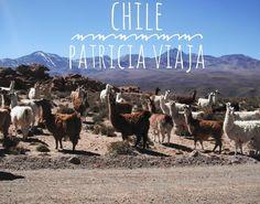 Voltamos Brasil. Já já começam os vídeos da última viagem para o Chile.  #chile #americadosul #sudamerica #viagem #férias #vacaciones #trip #travel #photooftheday