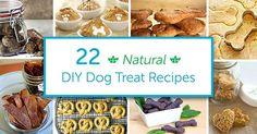 22 Natural DIY Dog Treat Recipes