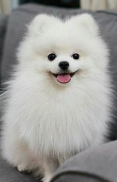 Things that make you go AWW! Like puppies, bunnies, babies, and so on. A place for really cute pictures and videos! Cute Baby Dogs, Baby Animals Super Cute, Cute Small Dogs, Cute Little Puppies, Cute Little Animals, Little Dogs, Cute Husky Puppies, Baby Pomeranian, Pom Dog