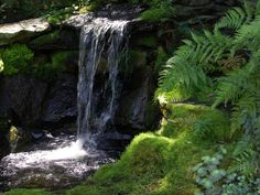 How to grow moss in your garden...contemporary landscape by Jay Sifford Garden Design