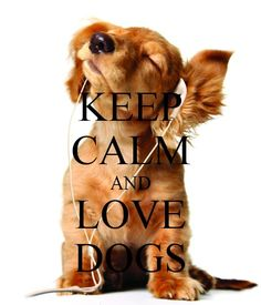 Keep calm This puppy is a cutie and so tech forward! Keep Calm Posters, Keep Calm Quotes, Pet Dogs, Dogs And Puppies, Dog Cat, Doggies, Animal Quotes, Dog Quotes, I Love Dogs