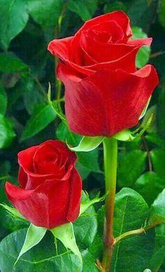 Per la meva estimada germana ROSITA EPD 11/11/16 amb dolor i amor jordi.