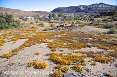 This small desert town is being invaded by daisy army. South Africa, Cape, Flora, Daisy, Deserts, Outdoor, Mantle, Outdoors, Cabo