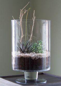 absolutely gorgeous succulent terrarium!  i must make this!