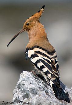 Bird Encontrado em flickr.com