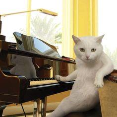 Full of cats ねこ軍団 : 画像                                                                                                                                                                                 もっと見る