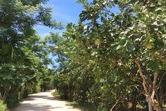 Thuy Bieu Day Trip