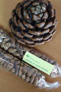 Piñones de Sierra Morena (Córdoba) / Pine nuts from Sierra Morena (Córdoba)