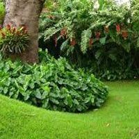 JARDIM TROPICAL    Predomina a exuberância das plantas típicas da floresta tropical. Materiais que somam à este estilo: pergolados, ripados, lagos e cascatas.