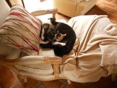 Elles s'aiment d'un amour tendre #chat #cat #chambredhote #bandb #cute #mignon #tarn #castelnaudemontmiral #gaillac http://lamaisonduchai.com/accueil.html