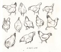 10 tips for sketching moving subjects : Close your eyes occasionally to take a mental snap shot Funny Sketches, Animal Sketches, Drawing Sketches, Chicken Drawing, Chicken Art, Bird Drawings, Animal Drawings, Horse Drawings, Arte Grunge