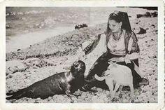 1957 La foca monaca c'era ancora ! Spiaggia di Baunei.