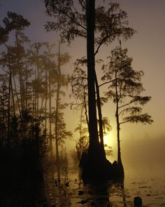 Sunrise over the Okefenokee National Wildlife Refuge in Folkston, Georgia. - I have some wonderful memories there.