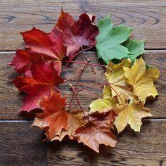 OCTUBRE: Recolectar y prensar plantas, flores y hojas | 3macarrons
