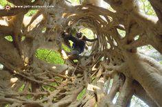 ghana nature - Google-søk