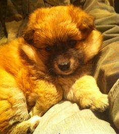 Edna - Week 127's Pedlars Dog of the Week!
