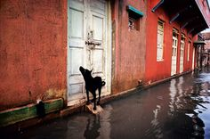 Monsoon in India, from Steve McCurry's blog