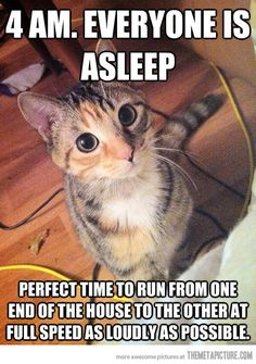 Sound cat logic. This is seriously what I deal with every day. Except it's two of them..
