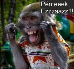 Its Friday meme lol humor funny pictures funny photos funny - Monkeys Funny - Its Friday meme lol humor funny pictures funny photos funny The post Its Friday meme lol humor funny pictures funny photos funny appeared first on Gag Dad. Funny Monkey Pictures, Friday Funny Pictures, Funny Photos, Photos Singe, Funny Shit, Funny Memes, Meme Gifs, Funny Work, Funniest Memes