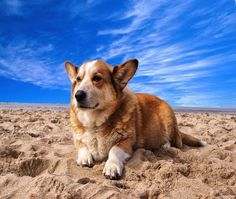WELCH CORGI DOG ON THE BEACH COMPUTER MOUSE PAD  9 X 7  #UnbrandedGeneric