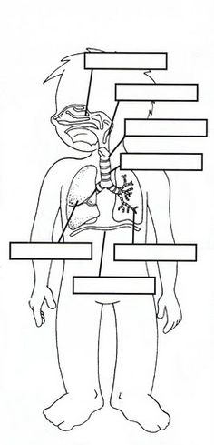 learningenglish-esl: RESPIRATORY, DIGESTIVE & CIRCULATORY BODY SYSTEMS