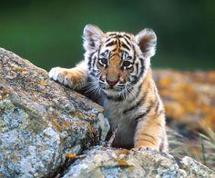 les-39-bebes-animaux-les-plus-craquants-du-regne-animal-qui-vous-feront-fondre-de-tendresse4