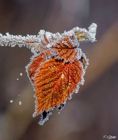 Frosty morning 9 by on DeviantArt