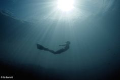Soaking up the rays from below the surface.