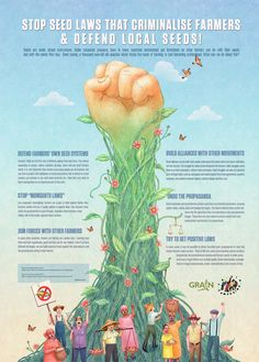 http://healthimpactnews.com/wp-content/uploads/sites/2/2015/04/grain-5150-infographic-stop-seed-laws-that-criminalise-farmers-defend-local-seeds-1.jpg