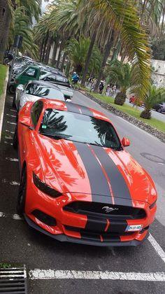 Mustang 2015 - Freddy - Ford Chambéry