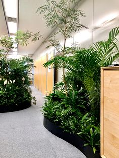 Green Interiors, Office Plants, House Design, Commercial Design, Natural Interior, Tropical Tree, Plant Decor, Roof Garden Design, Garden Design