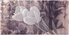 Tulpen in Textil (by foto-fuks)