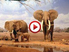 Intelligent elephant attacks rhino with a stick #animals, #Africa, #elephants, #travel, https://apps.facebook.com/yangutu