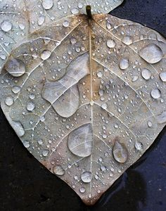 """Leaf in Rain,"" a photo by alan_sailer. I live the purple clay tones of this image, the clarity and definition of the water droplets, and the detail on the leaves. Dew Drops, Rain Drops, Fashion Design Inspiration, Vitrine Design, I Love Rain, Foto Poster, Fotografia Macro, Water Droplets, Dancing In The Rain"