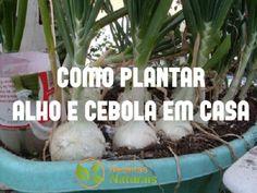 Horta em casa - como plantar alho e cebola em casa